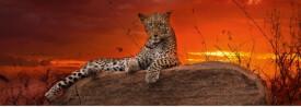 HEYE Panoramapuzzle Alexander von Humboldt - Red Dawn - 2000 Teile